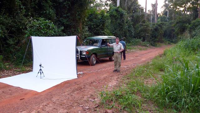 Préparation d'une collecte nocturne. Bobiri Forest (Ghana), 1er décembre 2013. Photo : J.-F. Christensen