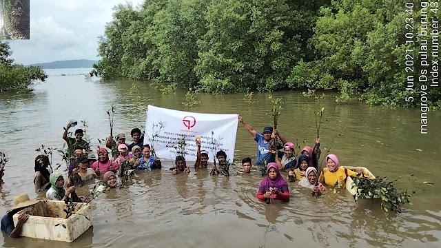 Hari LH Sedunia, Mardani H. Maming Inisiasi dan Fasilitasi Penanaman 20 Ribu Bibit Mangrove