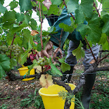 2013 vendanges du chardonnay - 2013%2B09%2B28%2BGuimbelot%2Bvendanges%2Bdu%2BChardonnay%2B119.jpg