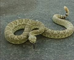 How to keep snakes away from your home
