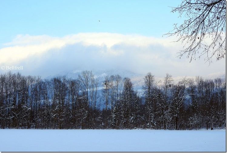Winterflur 1
