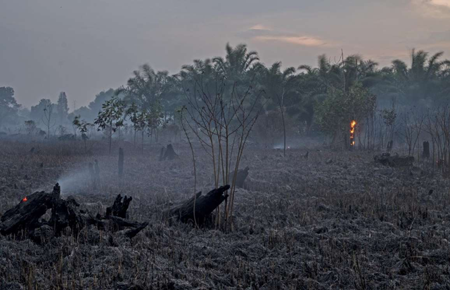 Extreme heat in Indonesia: A freshly-scorched landscape in Pekanbaru, Indonesia in August 2017, after a fire caused by hot temperatures and lack of rain. Photo: NurPhoto / SIPA USA / PA Images
