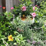 Gardening 2012 - IMG_3738.JPG