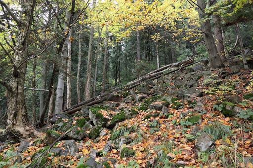 Les pod Žobrákom