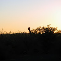 Tuli Block - Giraffe silhouette seen at sunset