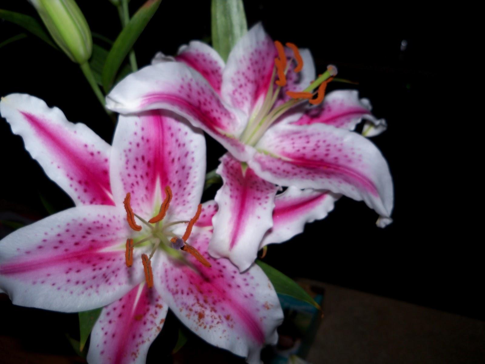 Bouquets - 101_0226.JPG