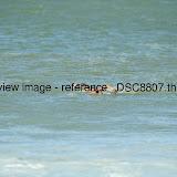 _DSC8807.thumb.jpg