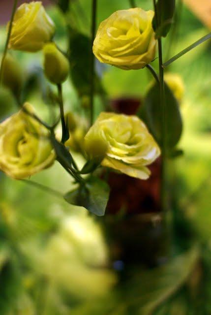 fleur - IMGP9517.JPG