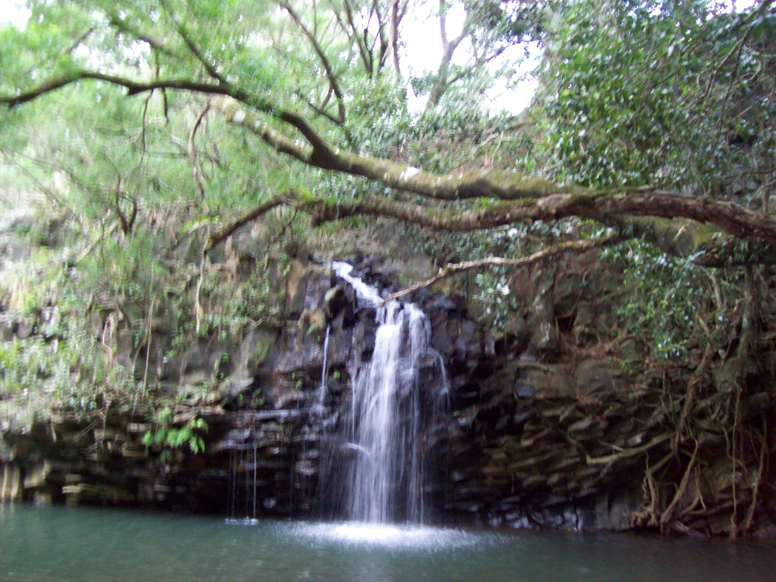 Hawaii Day 5 - 100_7319.JPG
