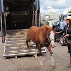 paarden4daagse Zorgvliet 2012 041.jpg