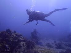 Anastasia on the reef hook