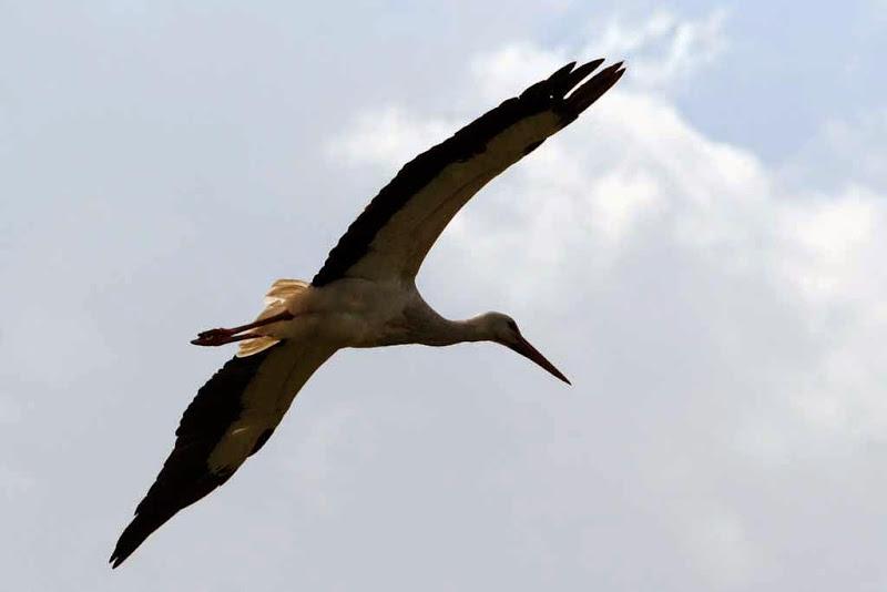 Vogels en dieren - IMG_7273.JPG