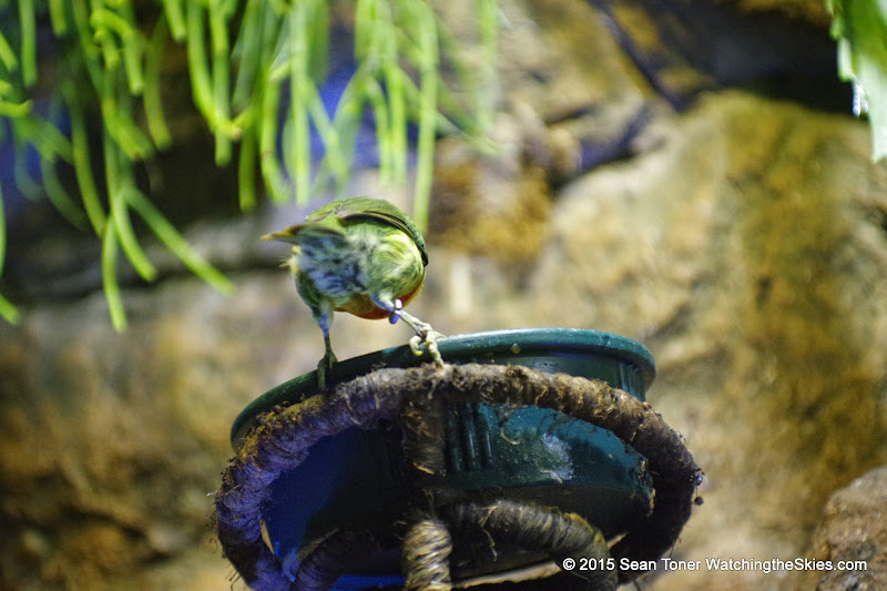 03-11-15 Dallas World Aquarium - _IMG1014.JPG