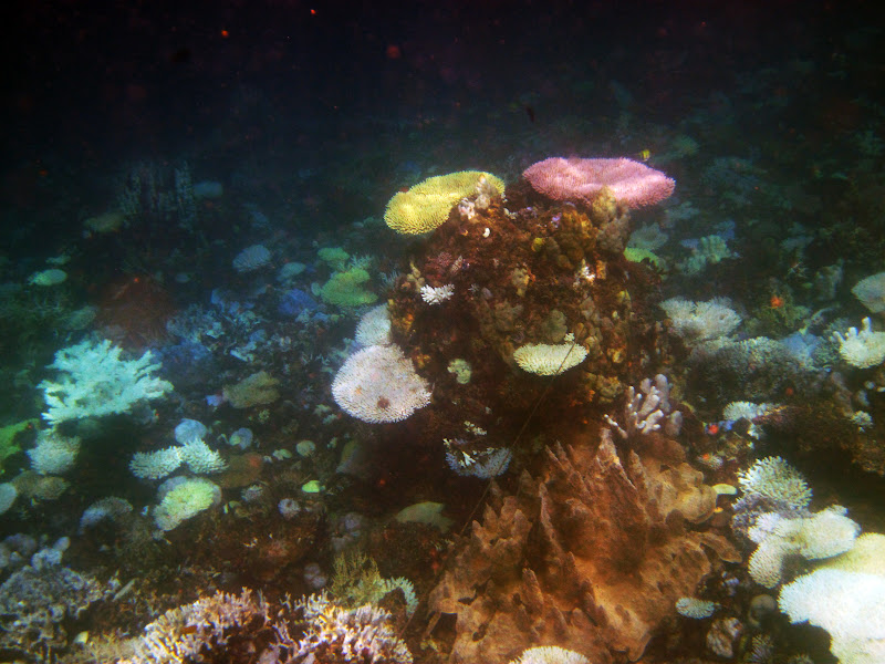 Pambato Reef, Puerto Prinsesa, Palawan