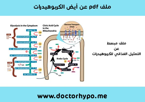 ملف التمثيل الغذائي للكربوهيدرات pdf باللغة العربية