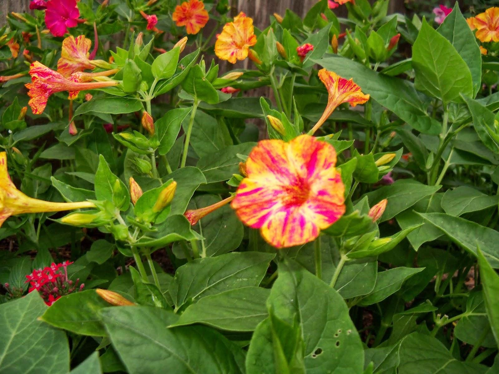 Gardening 2014 - 116_1954.JPG