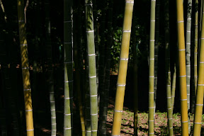 Bamboo, Imperial Palace East Gardens