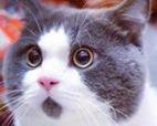 CUTE-Cat-02-C(1)