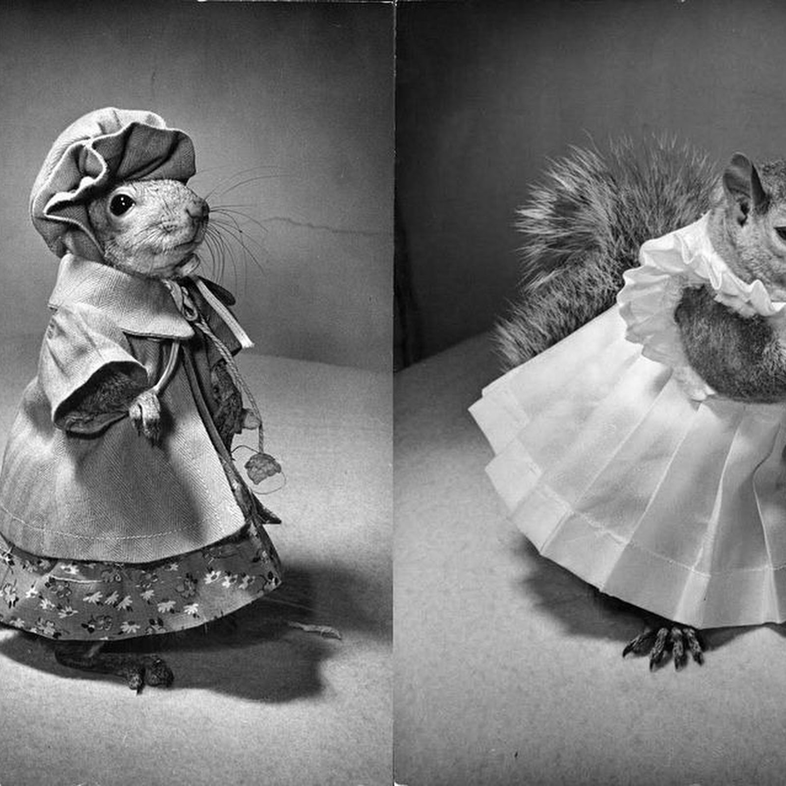 Tommy Tucker: The Famous Squirrel Who Cross-Dressed And Sold War Bonds