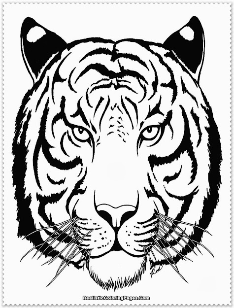 Realistic Tiger Coloring Pages Realistic Coloring Pages Throughout Tiger  Coloring Page