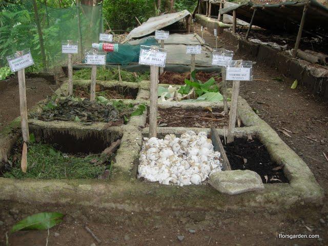 Vermiculture - DSCN0430.JPG