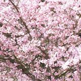 28. März 2012 Natur