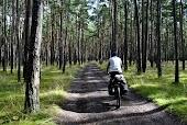 Дорога в лесу. Эстония