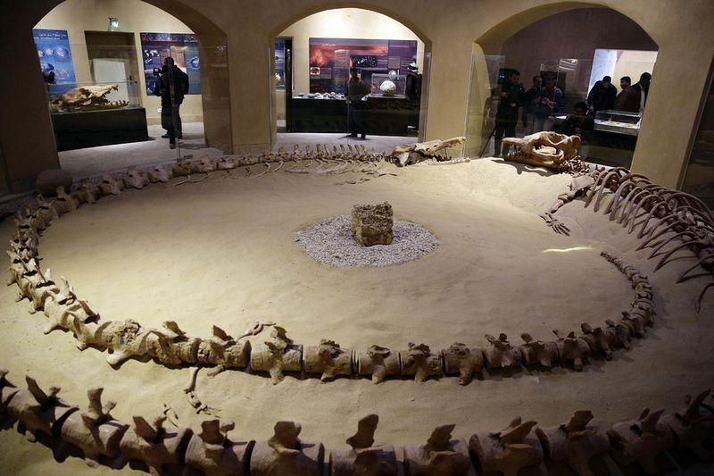 wadi-al-hitan-museum-4