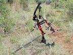 Foto Marius NortjeTwee boe staan op die grond en wag vir hulle eienaars om hull eop te tel sodat n pyl deur hulle teen n minnimum spod van 300ft/sek geskiet kan word.