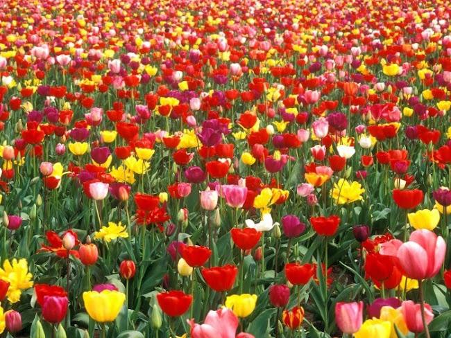Florist Cecil Hills: Popular Flowers Sold Nowadays