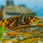 My butterfly friend was happy to pose for some close ups while he stood on the Great Wall.