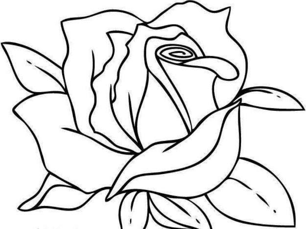 Printable Coloring Pages Roses