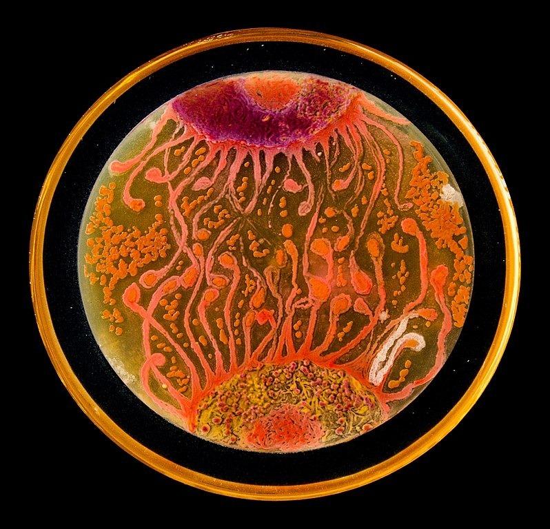 microbial-art-5
