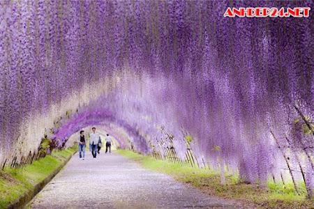 1001 Bức Tranh Phong Cảnh Đẹp Nhất Thế Giới