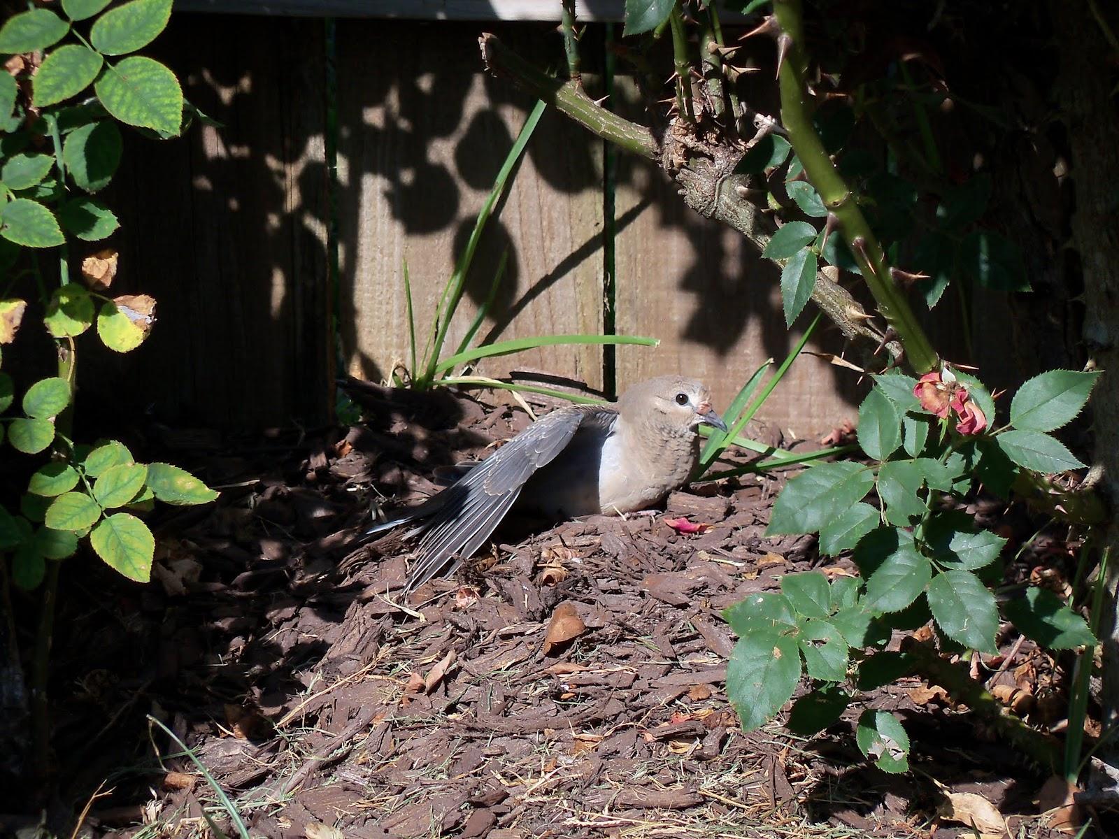 Gardening 2015 - 100_0505.JPG