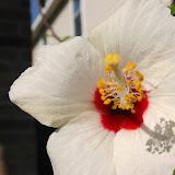Gardening 2012 - IMG_3182.JPG