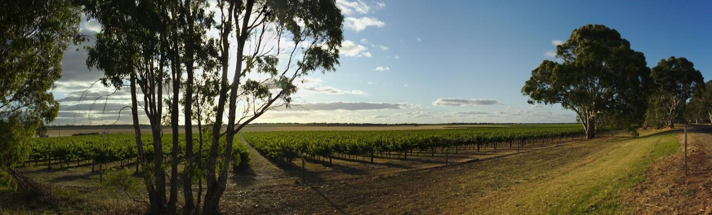 Winnice Południowej Australi