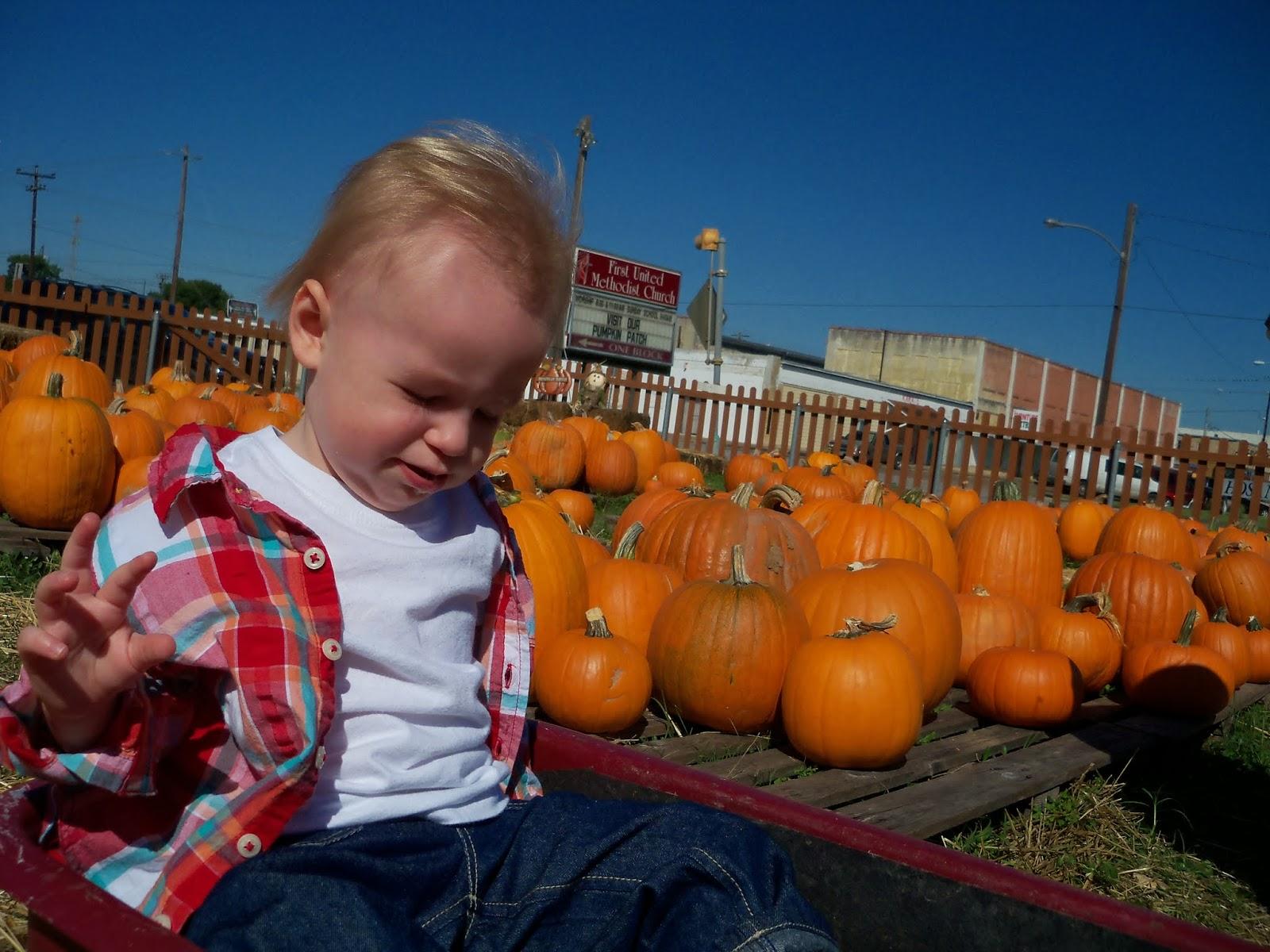 Pumpkin Patch - 115_8265.JPG