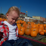 Pumpkin Patch - 115_8265.JPG