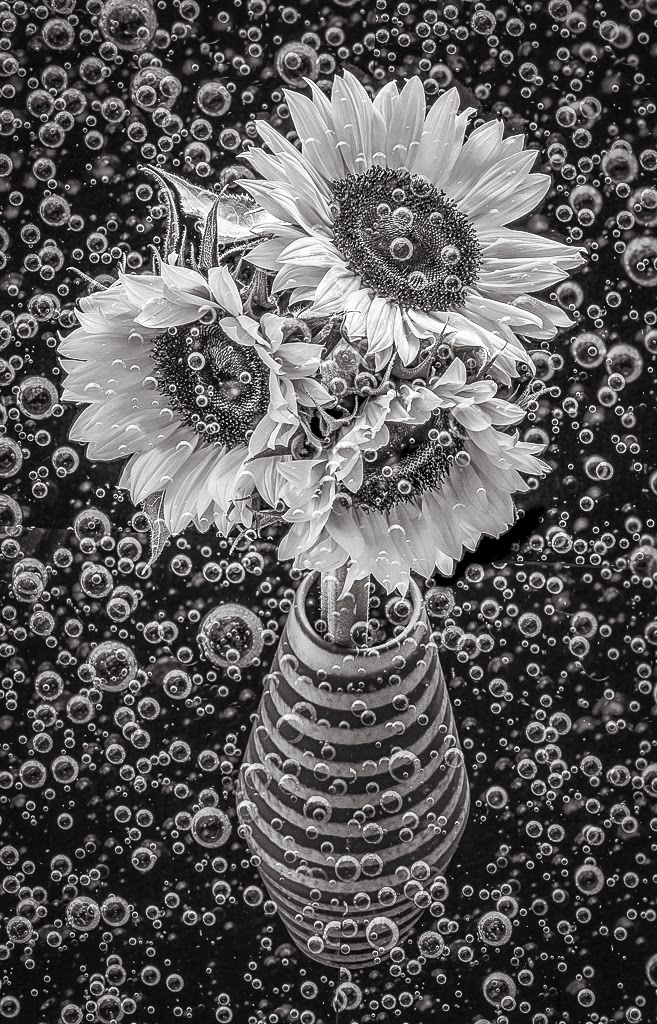 """Bubbly Sunflowers"" by Witta Priester - 2nd Place General A"