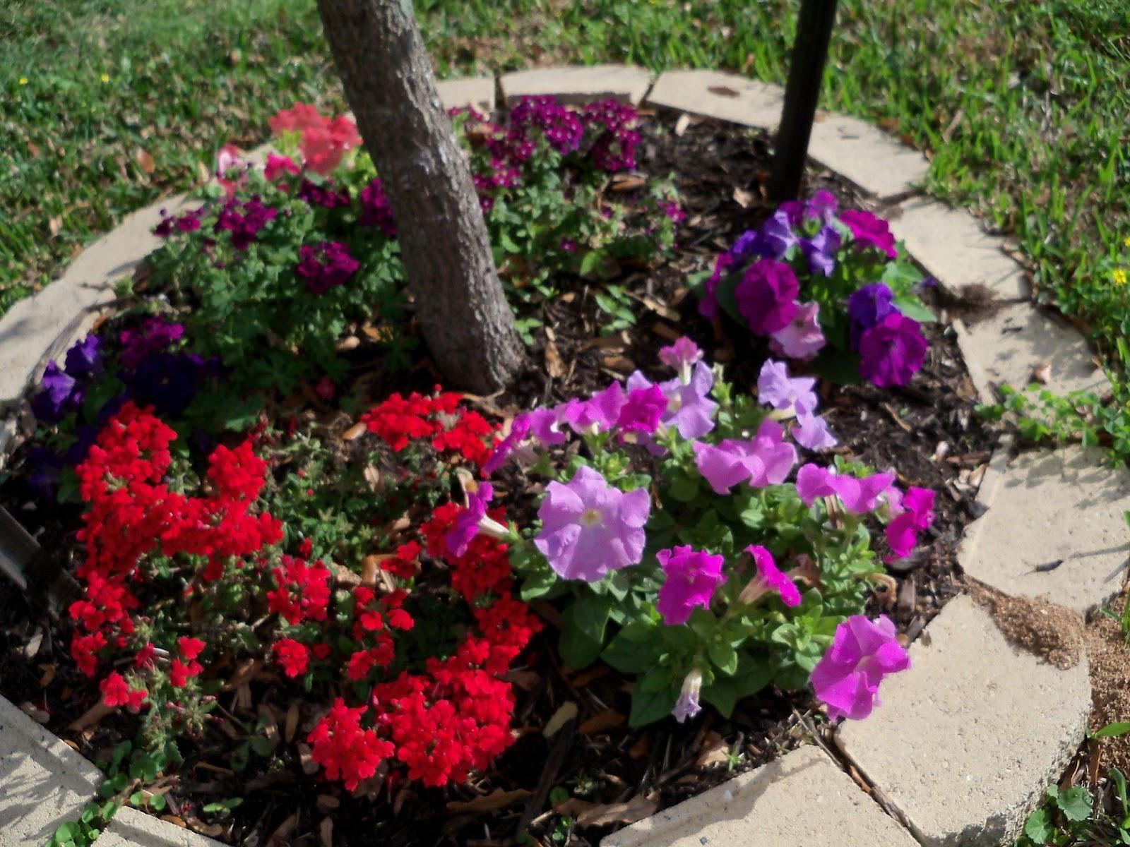 Gardening 2011 - 100_6994.JPG