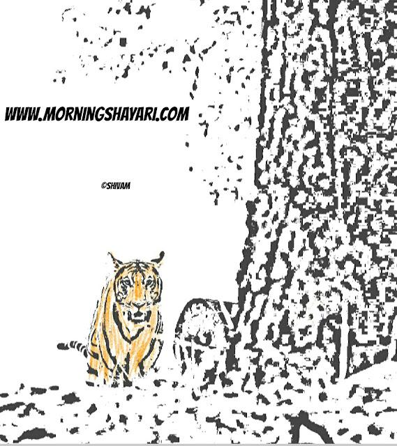 Tiger, Jungle King, Tiger poem, Tiger Image
