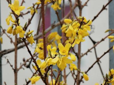 der Frühling legt in dieser Woche eine Pause ein!