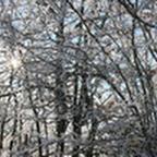 tn_lachaux-2010-12-30.jpg