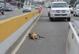 Hace falta un plan para el manejo de los animales muertos en las calles