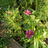 Gardening 2012 - 115_2656.JPG
