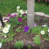 Gardening 2012 - IMG_2755.JPG