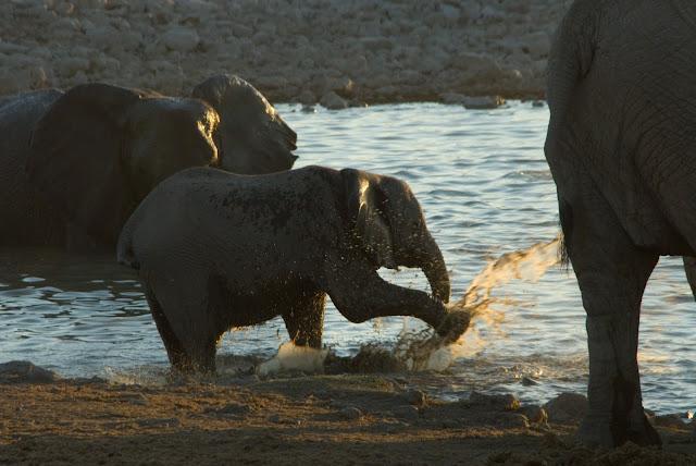 أفضل ما في أفريقيا  Best of Africa Namibia_090907111458