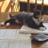 Tess helped me do taxes.