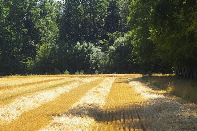 Après la moisson, Hautes-Lisières (Eure-et-Loir), 4 juillet 2010. Photo : J.-M. Gayman